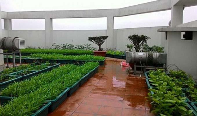 Chống thấm cho vườn trên sân thượng