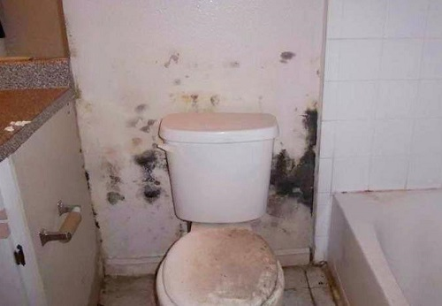 Phương pháp chống thấm dột nhà vệ sinh 1
